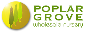 Poplar grove Wholesale Nursery